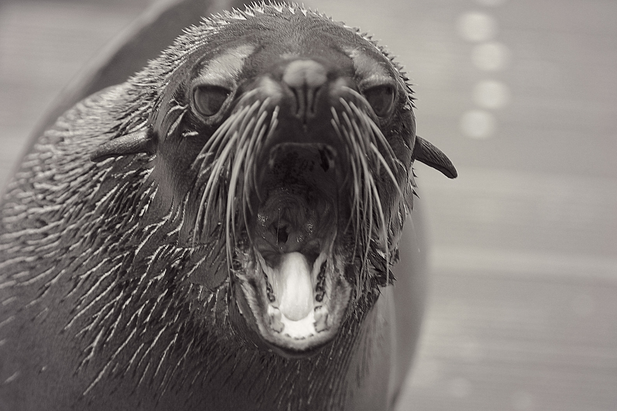 Photograph Pinniped by Eva Lechner on 500px