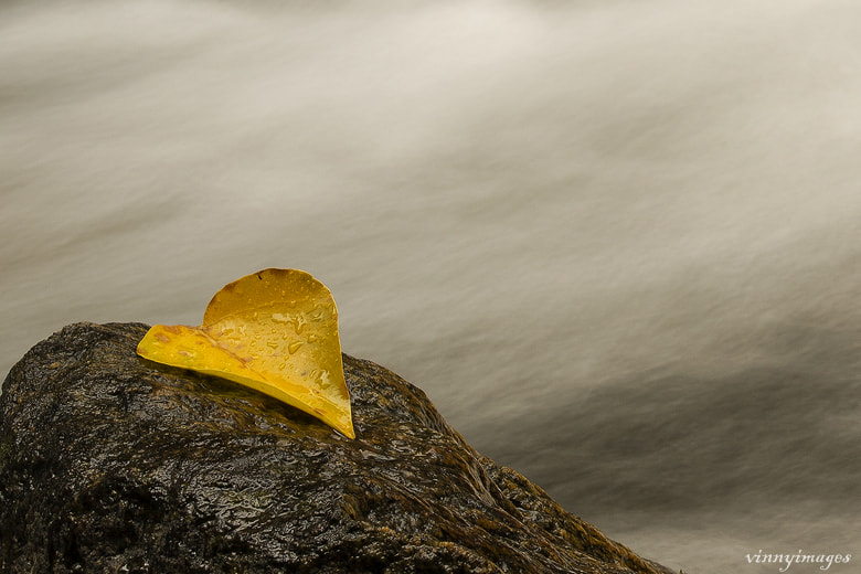 Photograph One leaf and one rock by Vinny Pickens on 500px