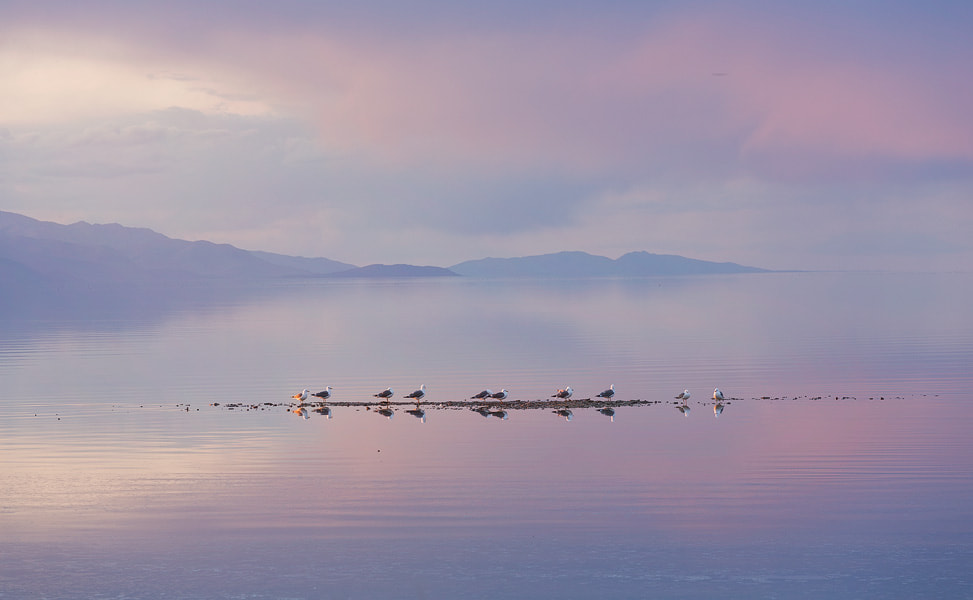 Photograph Birds of Salt by Justin Poe on 500px