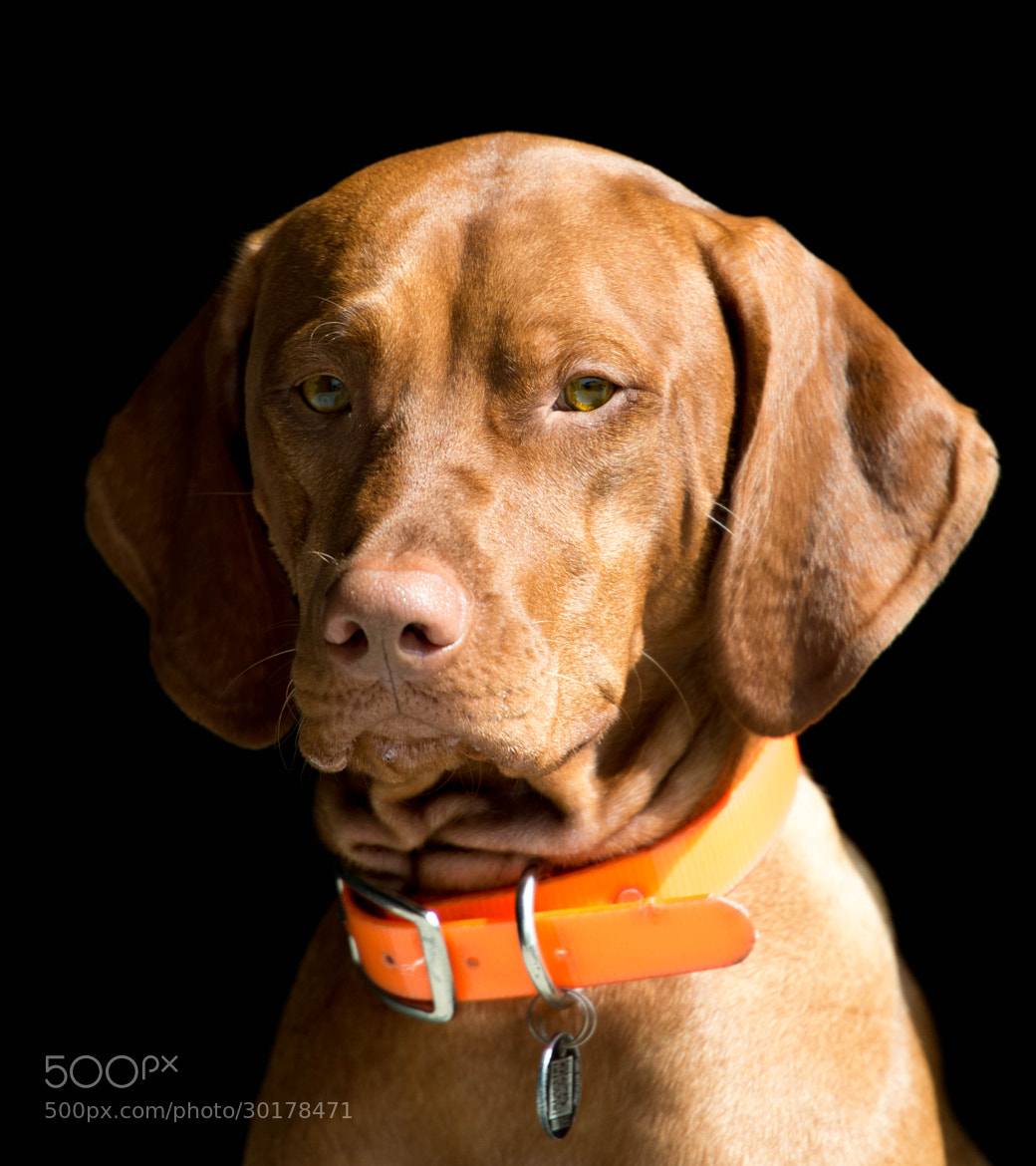 Photograph Boomer by Franklin Abbott on 500px