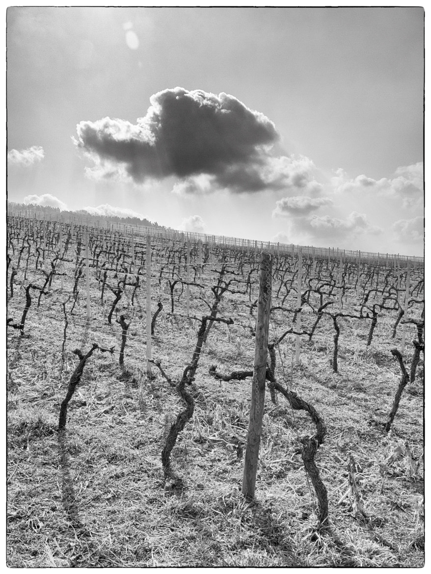 Photograph vineyards cloud by Ralf Kuhn on 500px