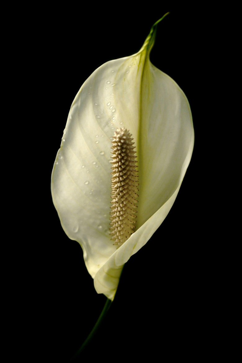 Photograph White Lady by John Purchase on 500px