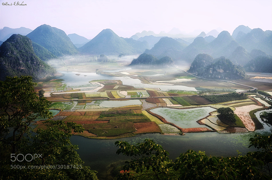 """Photograph """"Misty Patterns"""" by Amir Eltahan on 500px"""