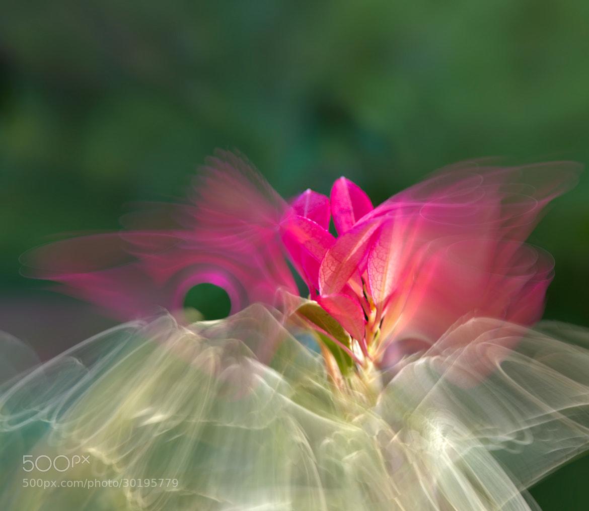 Photograph Leaves & Butterfly Metamorphosis by Josep Sumalla i Jordana on 500px
