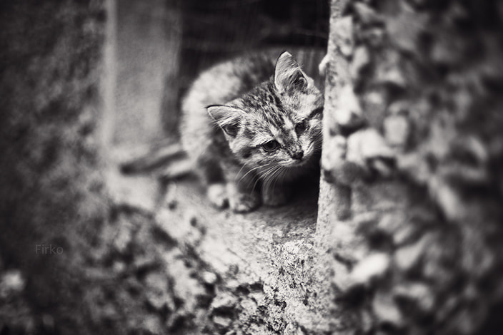 Photograph Cat 2 by Firko :) on 500px
