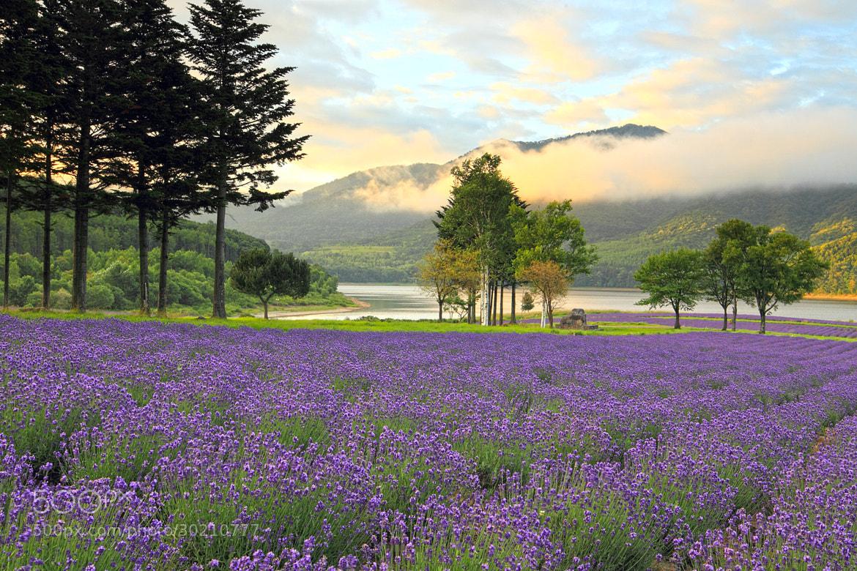 Photograph 湖畔の朝 by hirosima munetaka on 500px