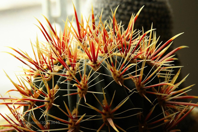 Photograph Cactus by Rausch Wilhelm Robert on 500px