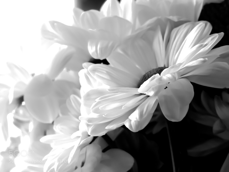 Photograph White Flowers by Teemu Tanskanen on 500px