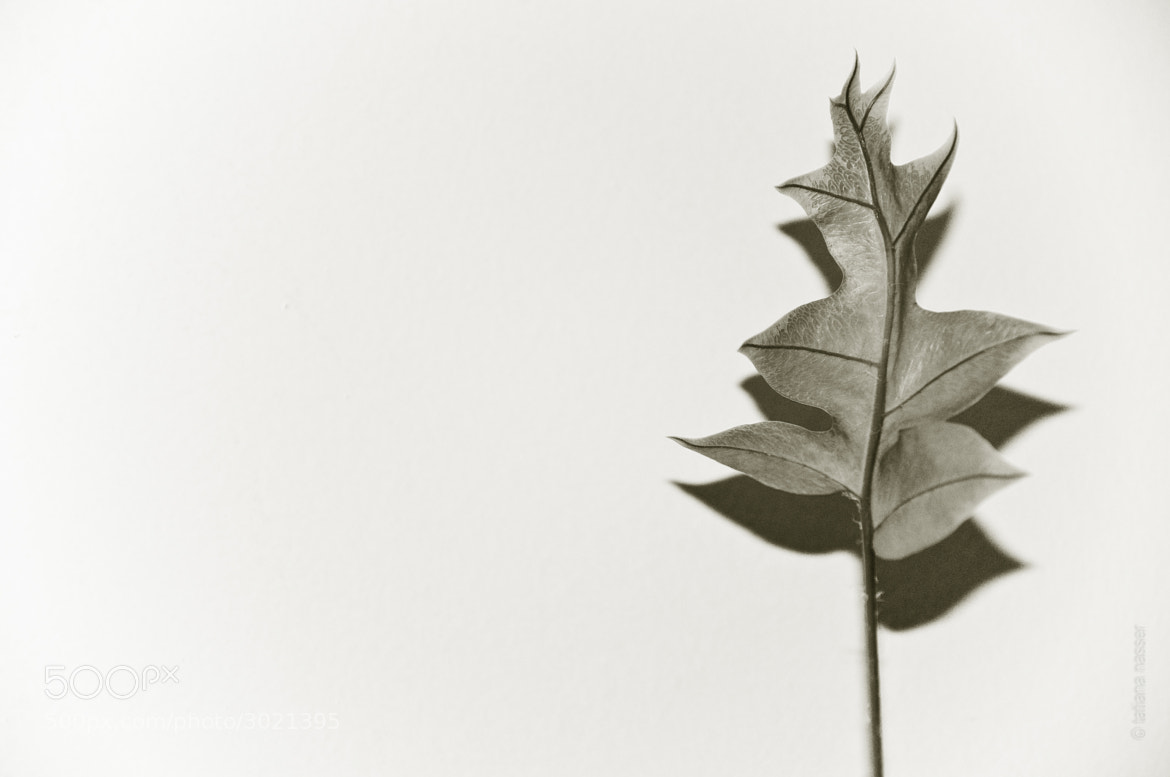 Photograph Sepia leaf by Tatiana Nasser on 500px