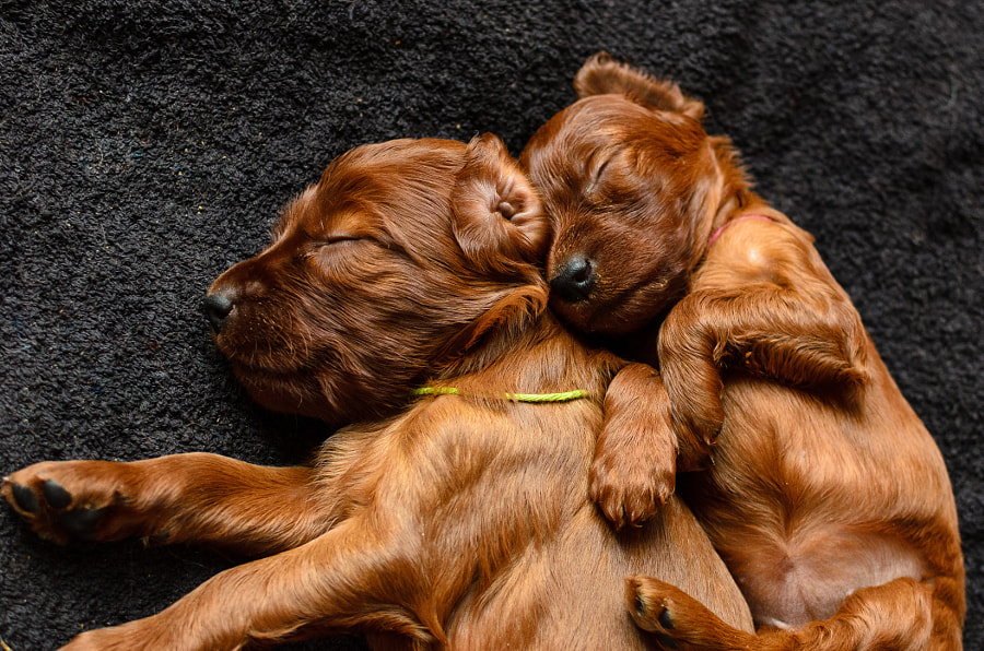 Puppy Images - I love my bro by Robert Bulten on 500px.com
