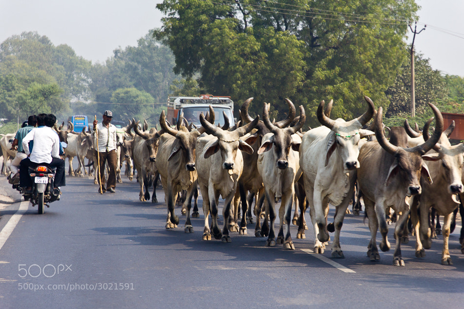 Photograph Indian roads by Joan Gómez on 500px