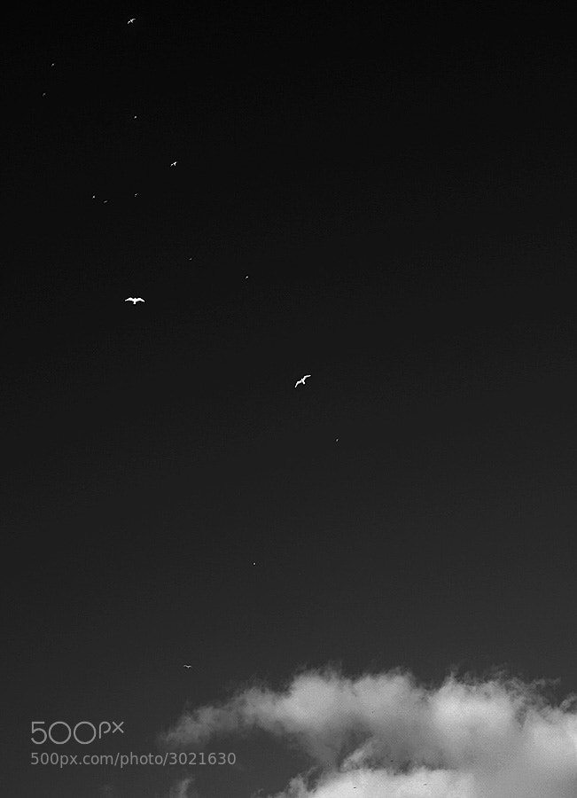 Photograph Angels by Nikolay Mokhnachev on 500px