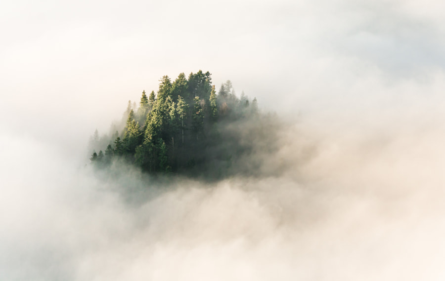 Trees and fog by Marcin Sz on 500px.com
