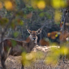 Waterbok North Luangwa National Park, Zambia