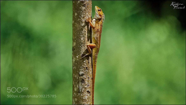 Photograph virtical limit :-) by Krishna Prasad on 500px