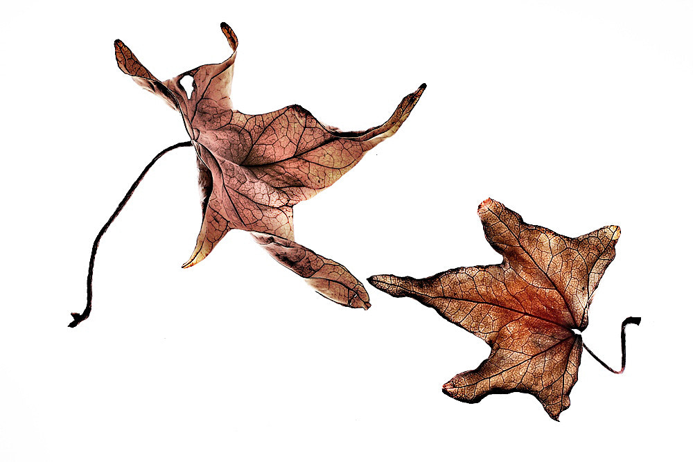 Photograph Leaves by Paola Congia on 500px