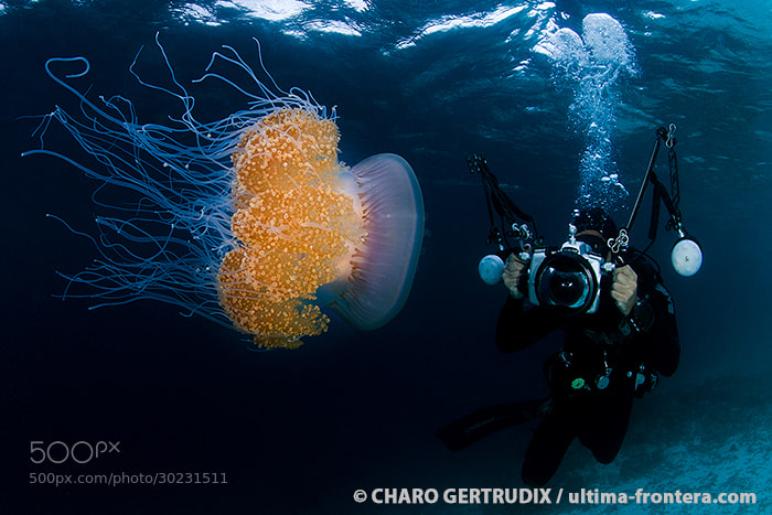 Photograph Jellyfish by Charo Gertrudix on 500px