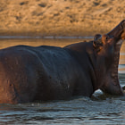 North Luangwa National Park, Zambia