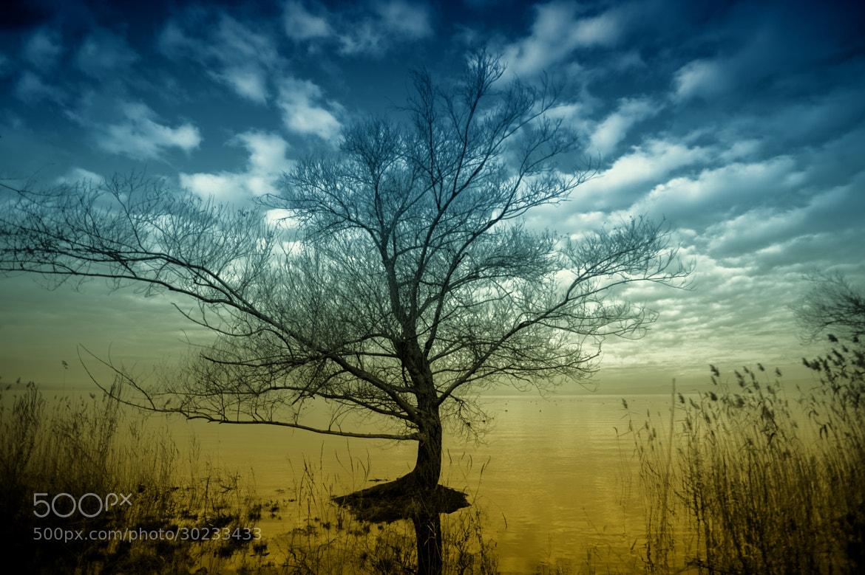 Photograph Lago dorato by David Guerrini on 500px