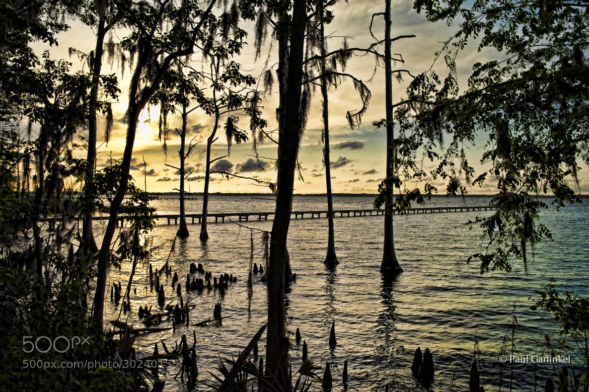 Photograph River Cypress by Paul Garfinkel on 500px