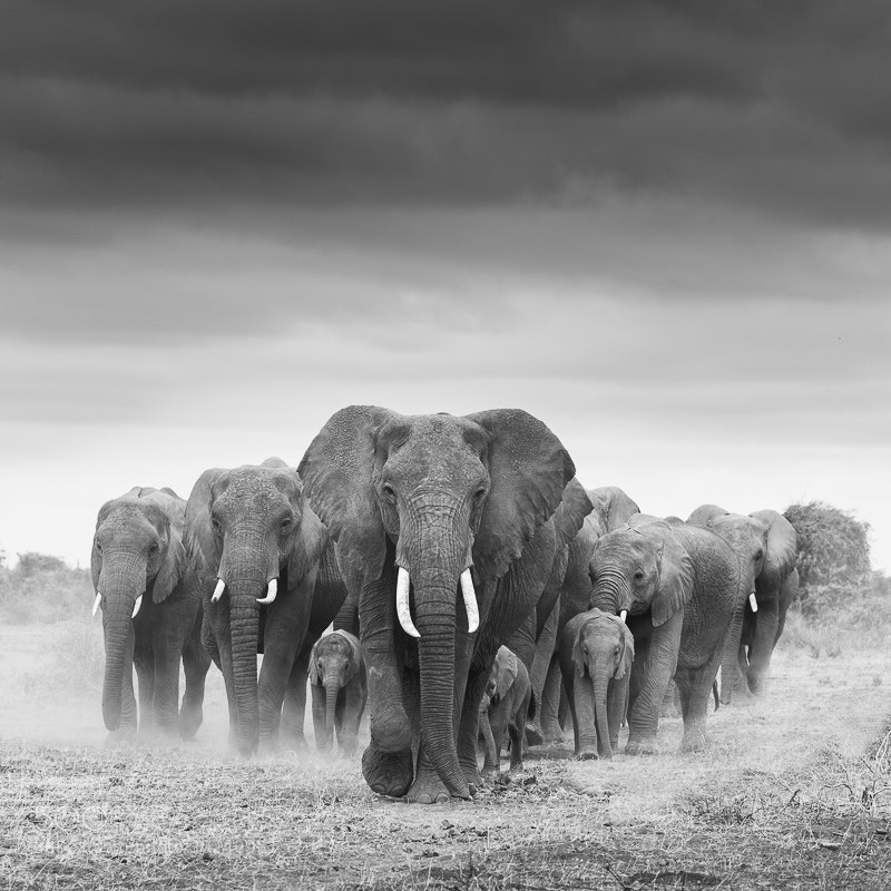 Photograph Moving the Herd by Antony Blake on 500px