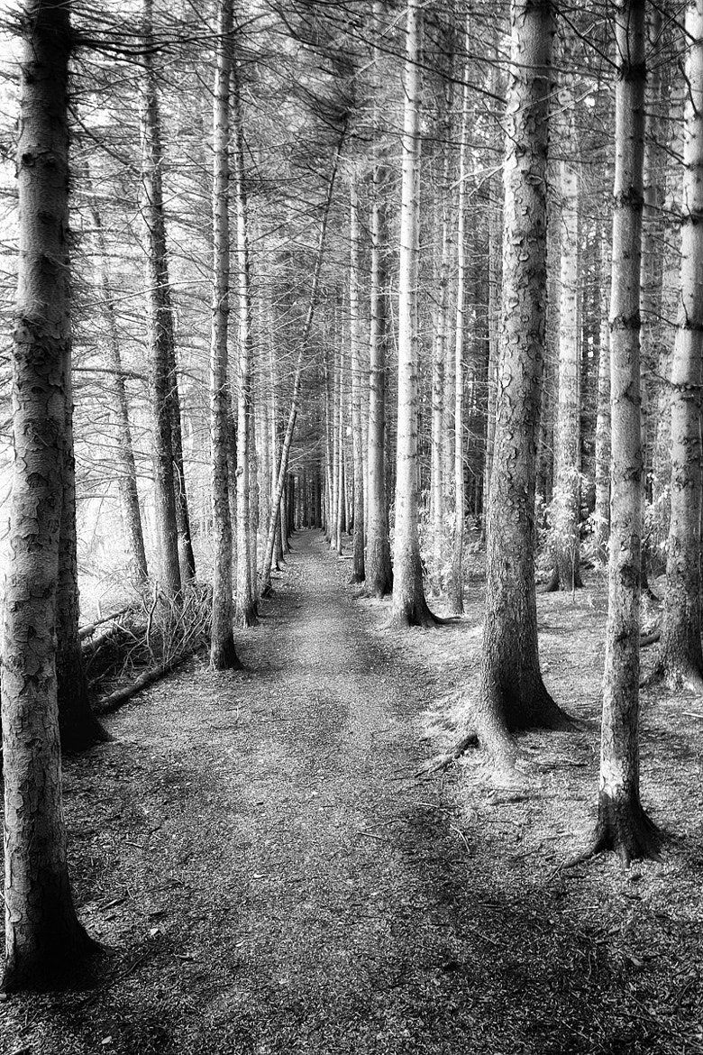 Photograph Country Paths by Ian McConnell on 500px