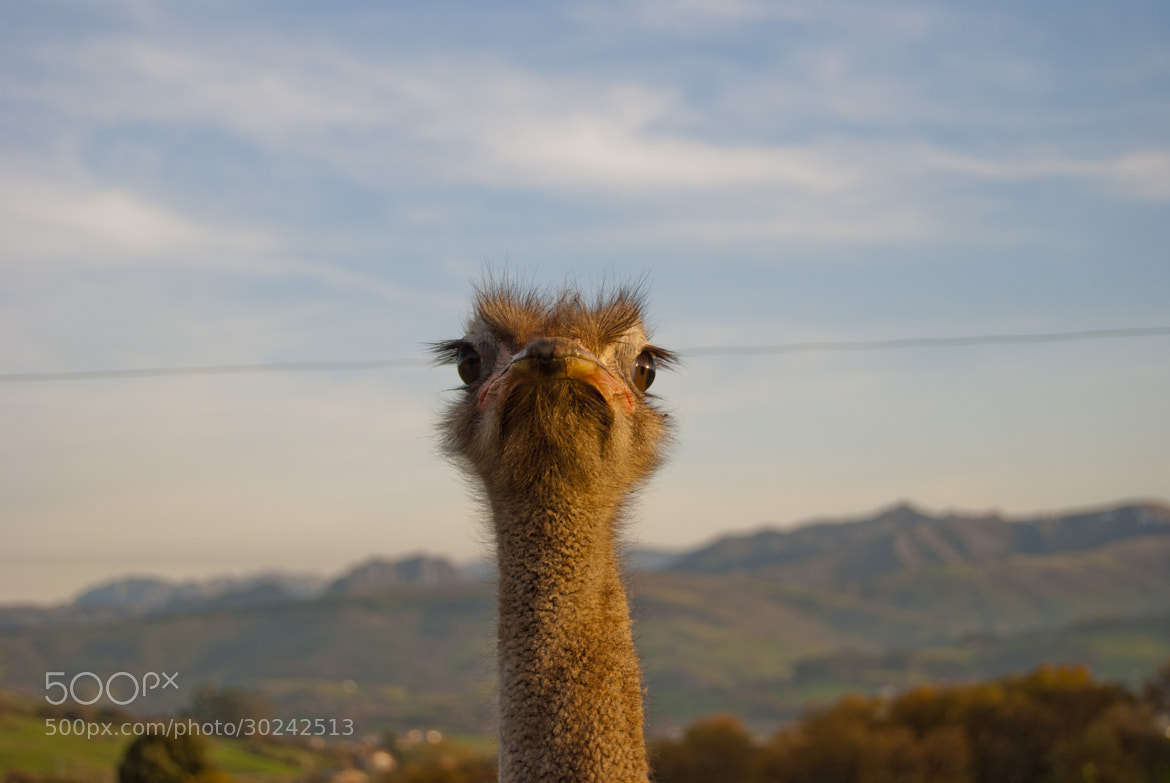Photograph Ostrich by Javier R. R. on 500px