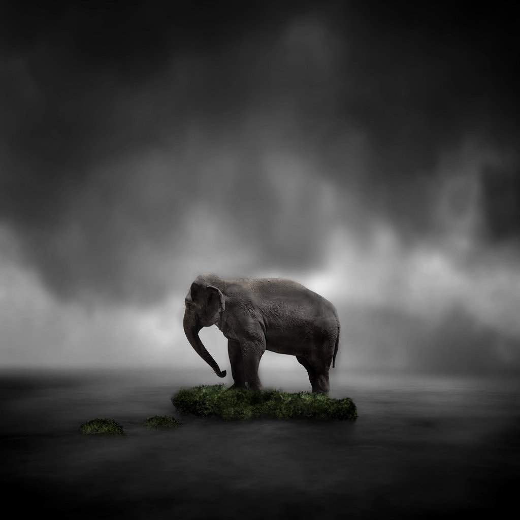 Photograph Almost extinct by Maruscik Photography on 500px