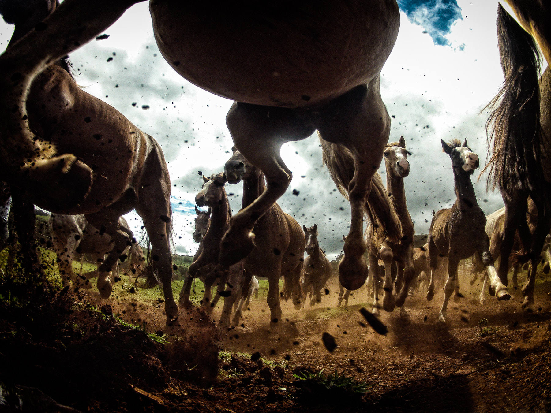 Photograph Horses power by Chris Schmid on 500px