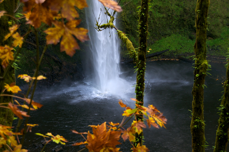 Silver Falls State Park in Oregon