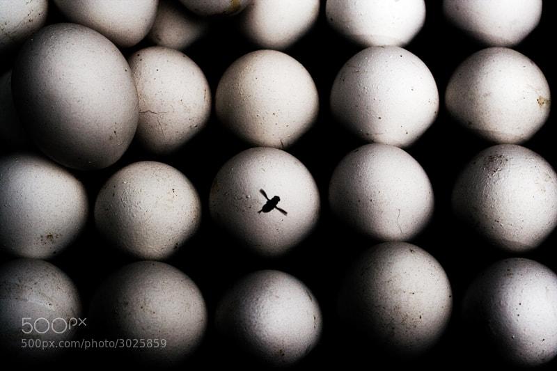 Photograph Planet o by Gurunathan Ramakrishnan on 500px