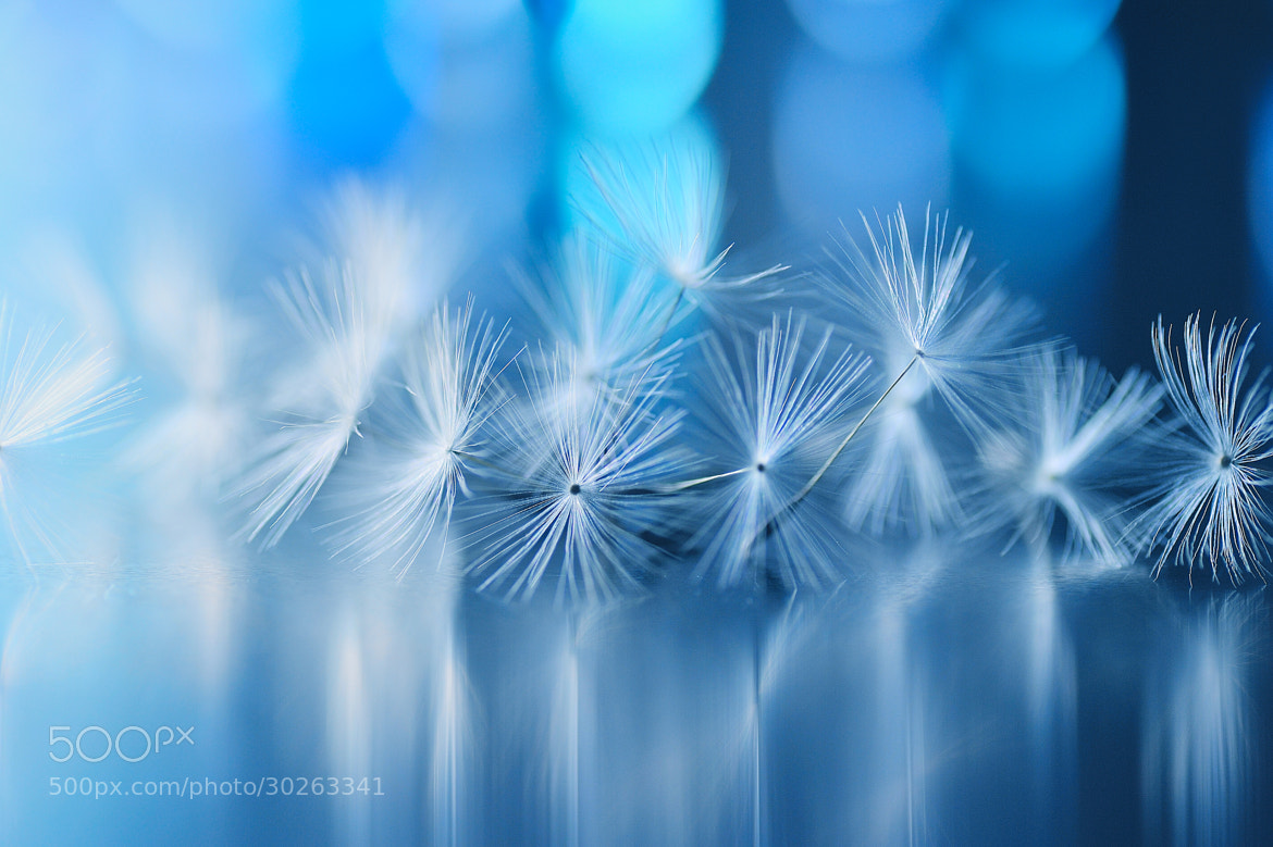 Photograph Gigue in a dream by Lafugue Logos   on 500px
