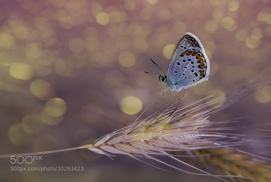 Photograph Butterfly effect - VI by Necat ÇETİN on 500px
