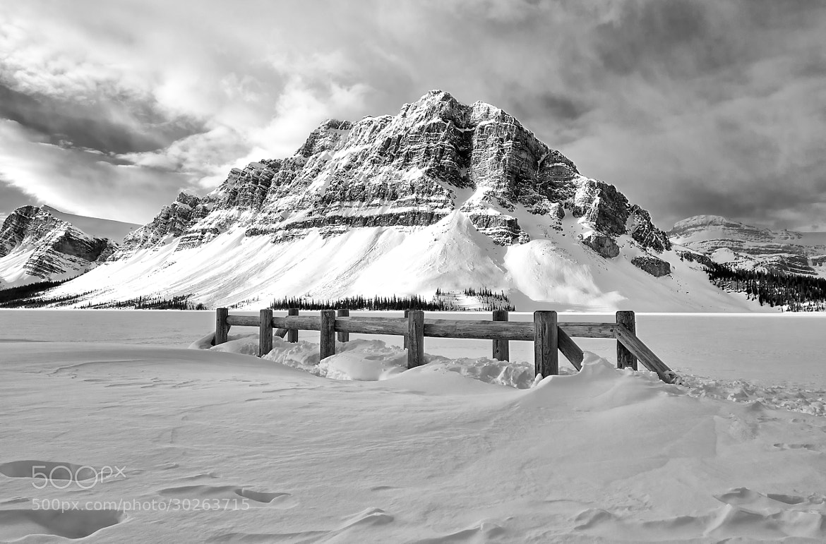 Photograph Standing Tall  by Yves Gagnon on 500px