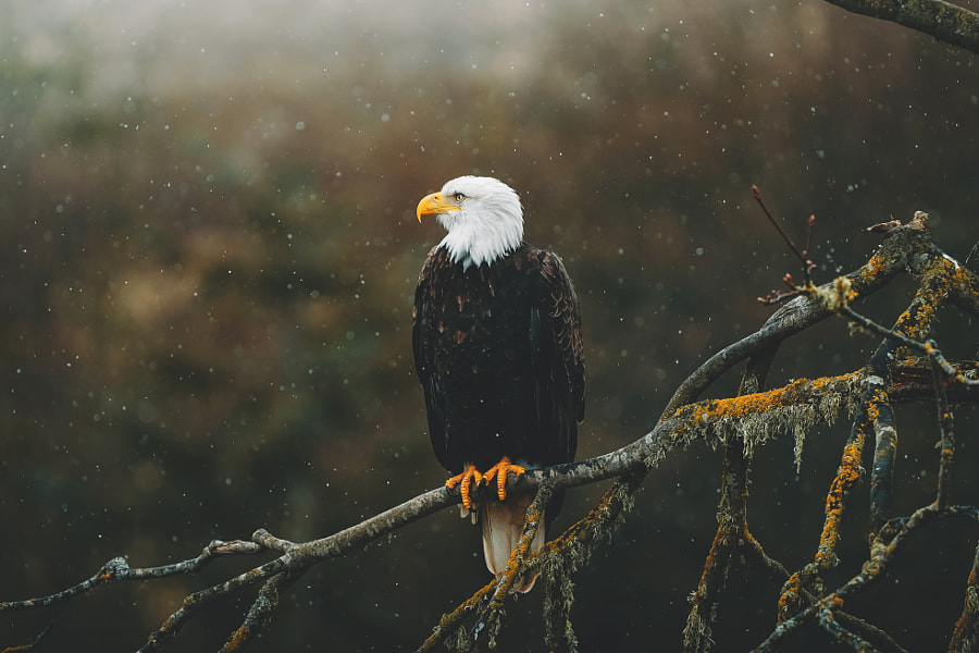 America. by charlotte little wolf on 500px.com