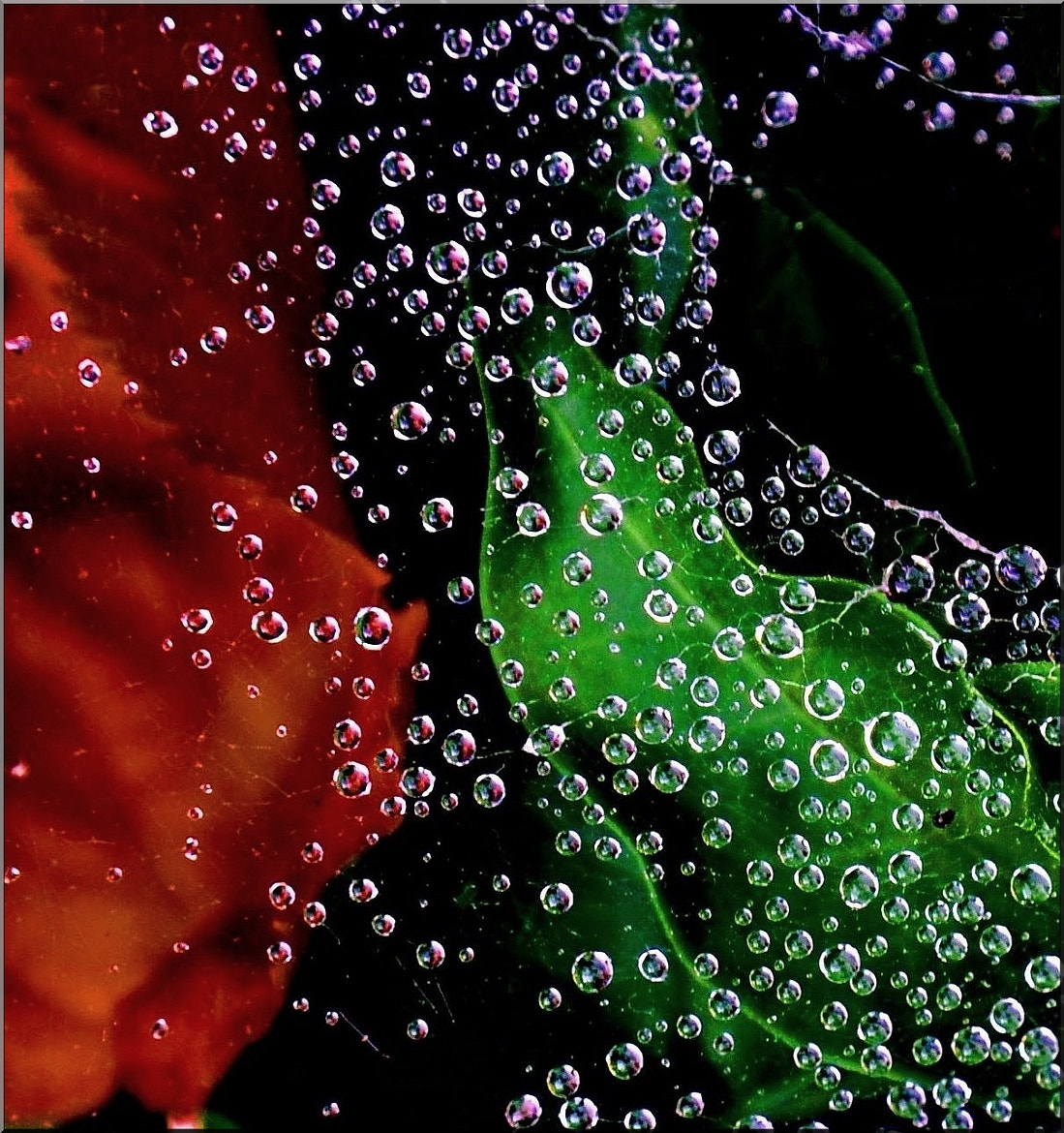 Photograph .....dew by Silena  Lambertini on 500px