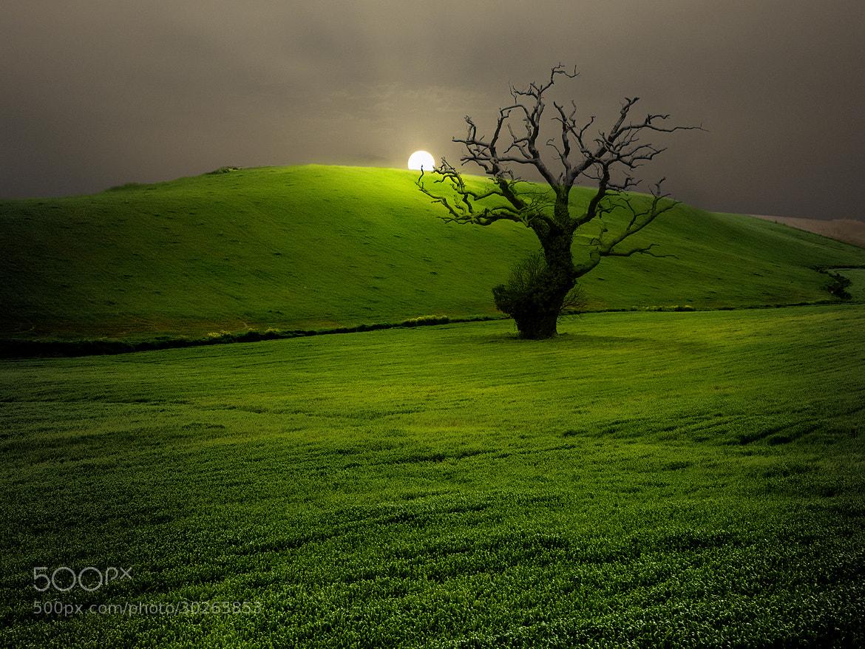Photograph Campo Andaluz / Andalusian countryside by Francisco García Ramírez on 500px