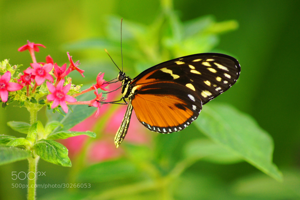 Photograph Butterfly Splendor by Aric Jaye on 500px