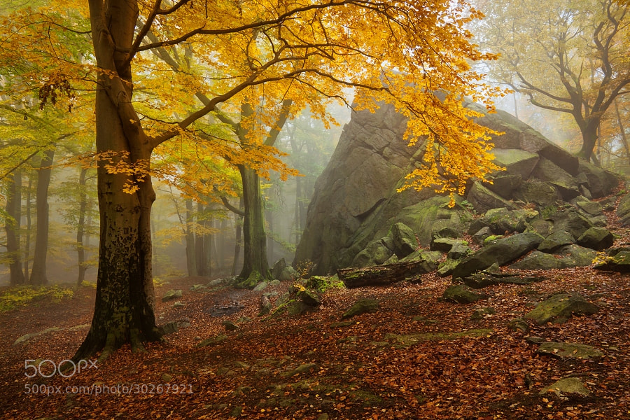 Photograph Autumn forest 5 by Daniel Řeřicha on 500px