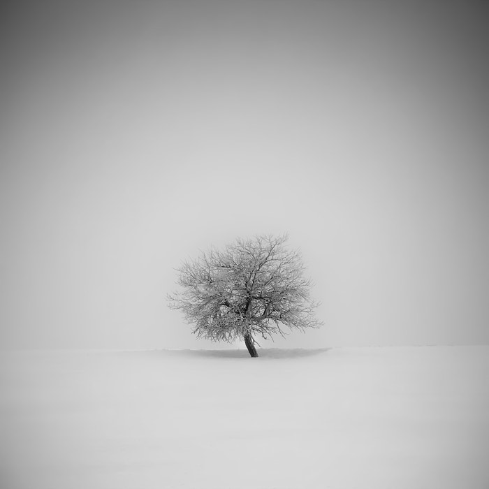 Photograph Winter in the Ore mountains by Daniel Řeřicha on 500px