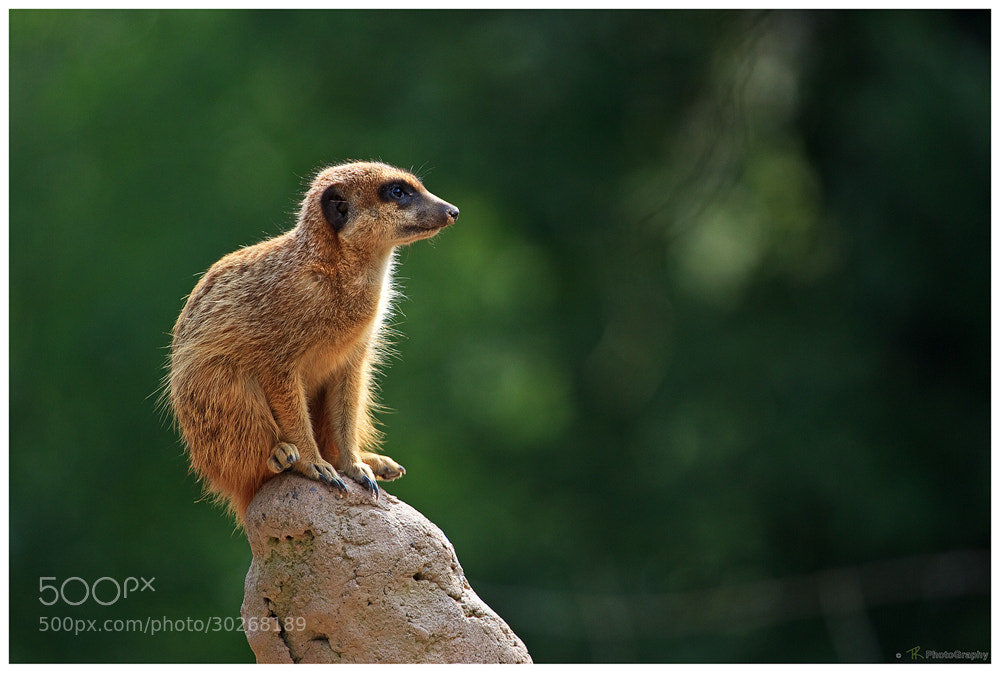 Photograph The Guardian by Tobi K on 500px