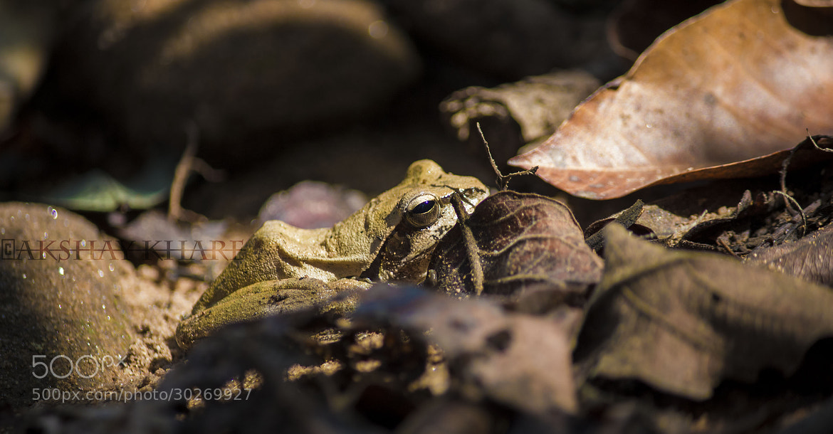 Photograph Frog !  by Akshay Khare on 500px
