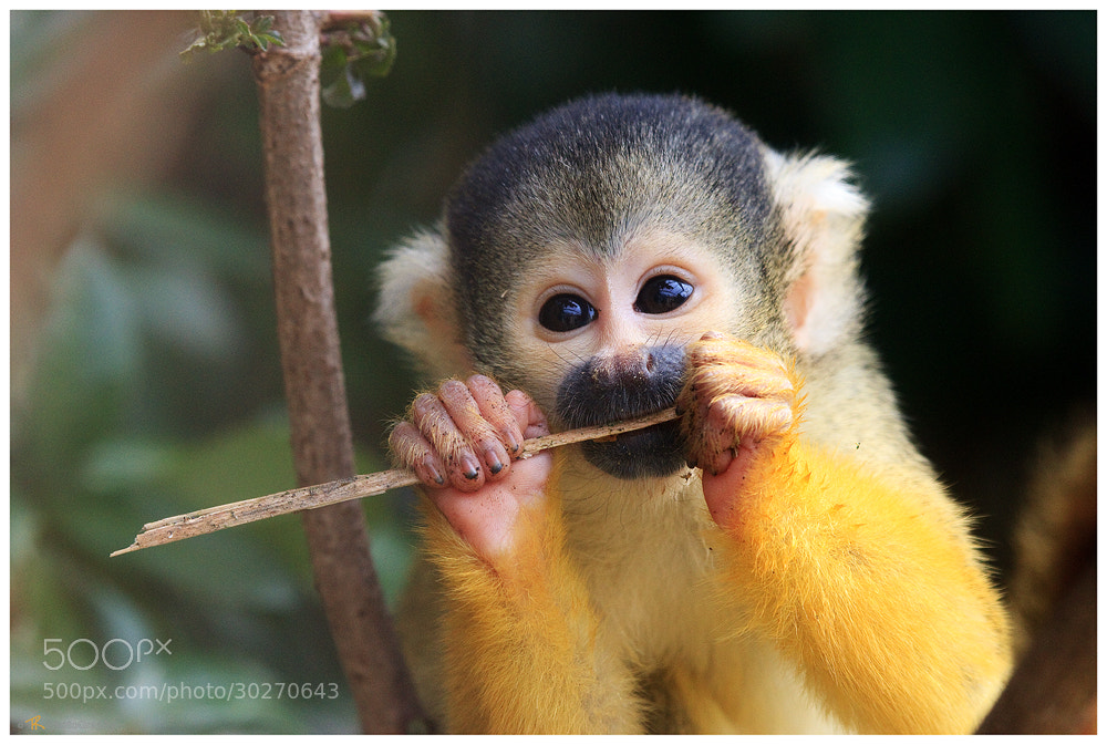 Photograph Playing Whistle by Tobi K on 500px