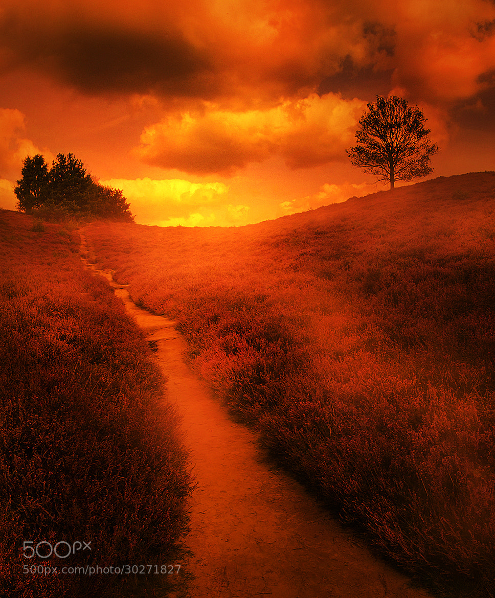Photograph warm walk by Patrick Strik on 500px