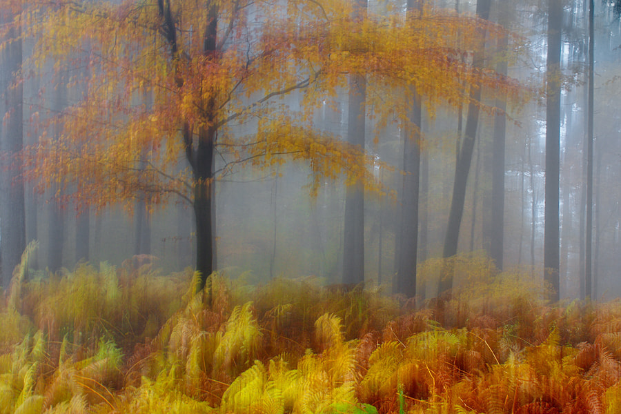 Photograph Autumn by Janez Tolar on 500px