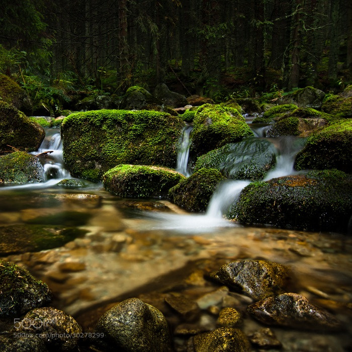 Photograph Forest stream  by Skonka  on 500px