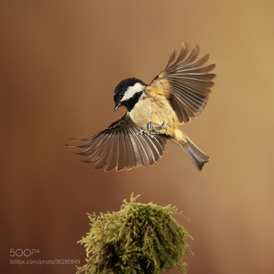Photograph Taking flight by Fris . on 500px