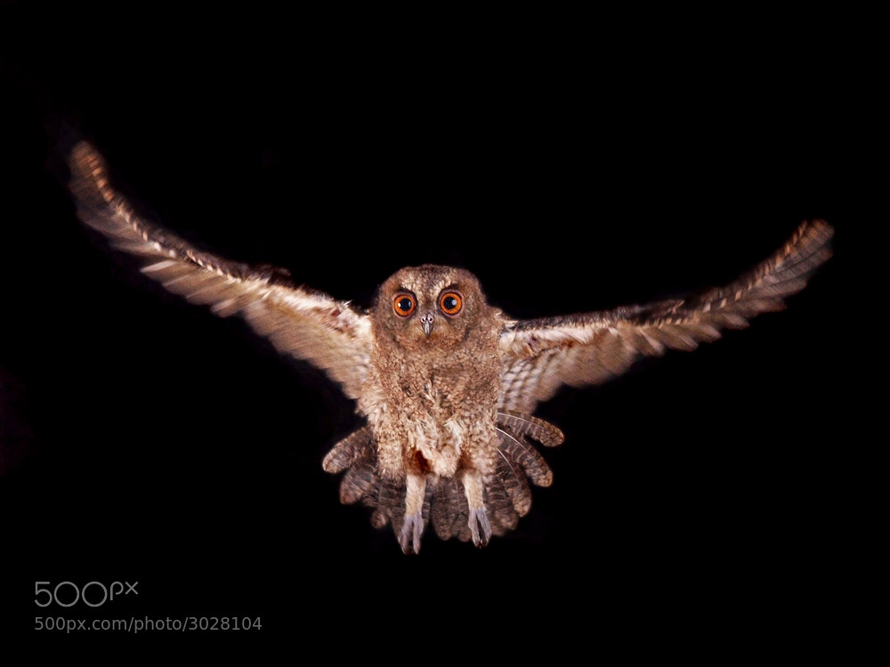 Photograph flightnight by Irawan Subingar on 500px
