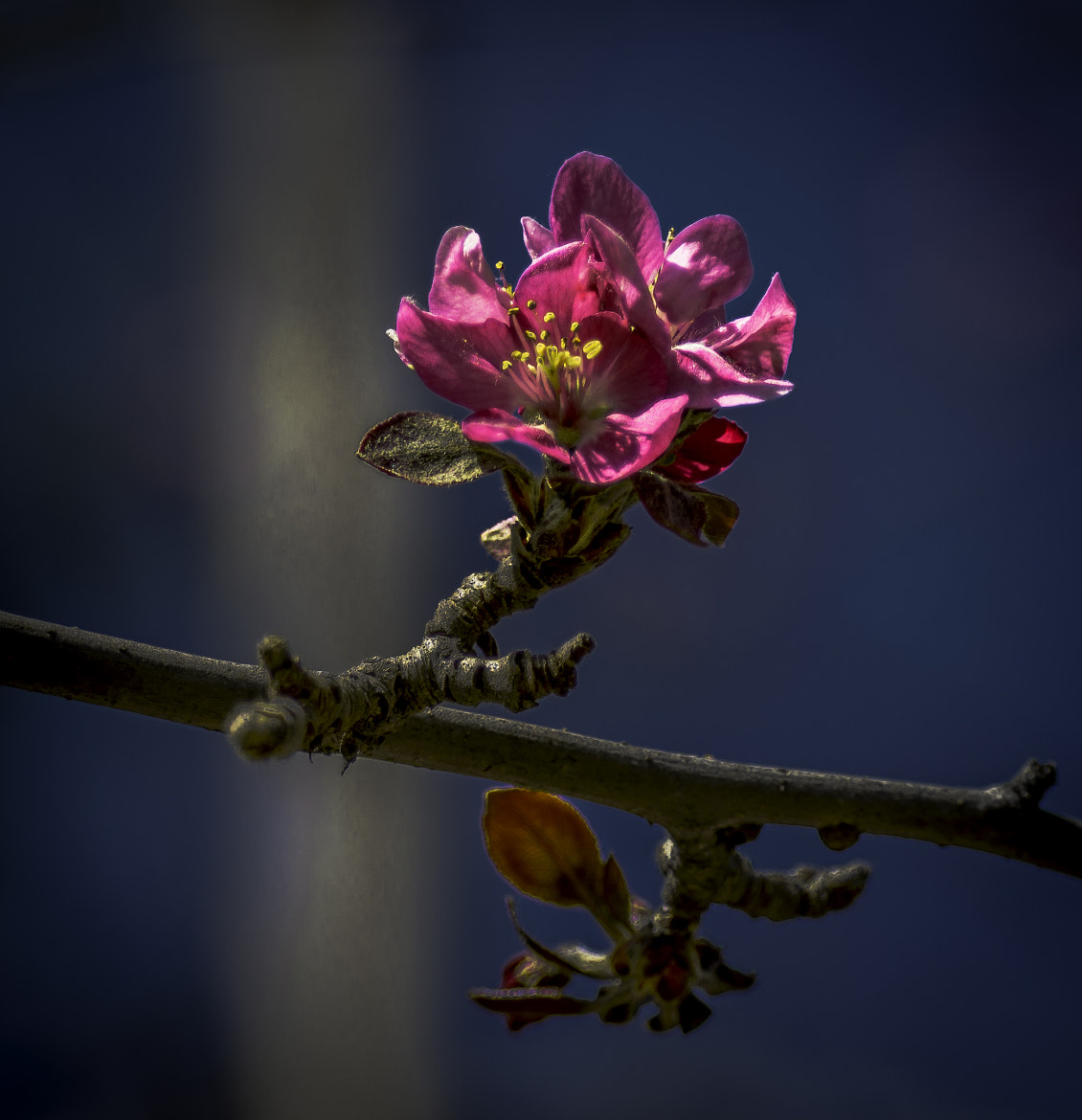 Photograph Spring Blossom 1 by Lou Lu on 500px