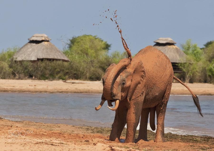 A Elephant enjoys a mud bath near to our accomodation on Rhino Island, Matusadona National Park, Zimbabwe